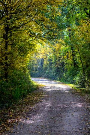autumn forest: Path Through Autumn Forest