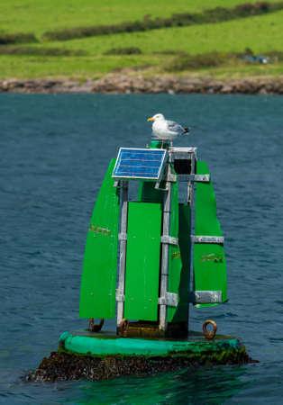 buoy: Seagull Sitting on Solar Buoy