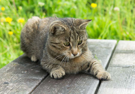 Young Cat on wooden bench in grass