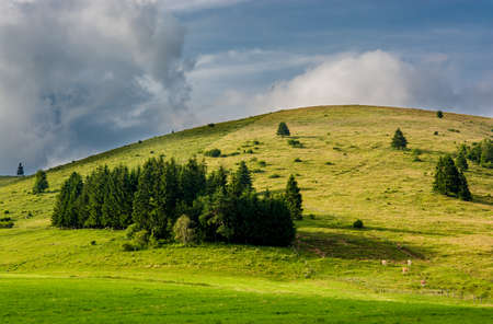 Pasture with cows in the hills of Styria in Austria