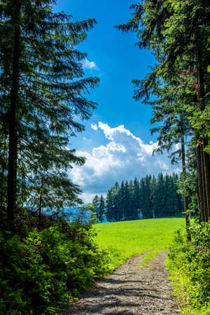 Abandoned Path through Forest in Styria in Austria Stock Photo
