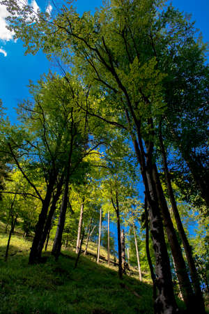 Sunlit Forest on Hill in Austria Stock Photo