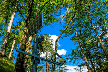 Sunlit Solar Panel in the Forest