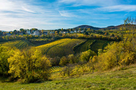 Settlement with Houses at Vineyard in Autumn Stock Photo