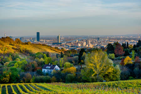 Vineyard in Autumn in Front of the Skyline of Vienna in Austria