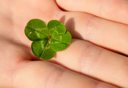 lucky charm: Clover With Four Leaves in Hand Stock Photo