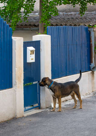 Dog standing outside door fence and waiting Stock Photo