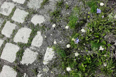 Green Meadow with Flowers and Cobblestones