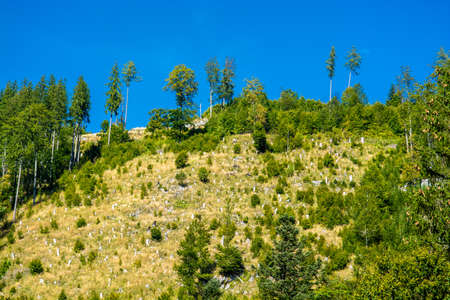 산지에서 삼림 벌채 스톡 콘텐츠 - 94688134