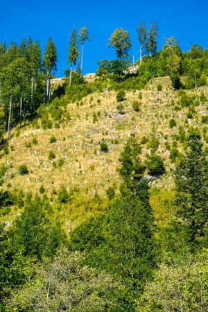 산지에서 삼림 벌채 스톡 콘텐츠 - 94773862