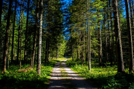 Gravel Road Through Sunlit Forest in Austria Stock Photo