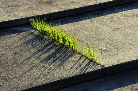 Fresh Grass Grows Through Narrow Gap in Concrete Steps