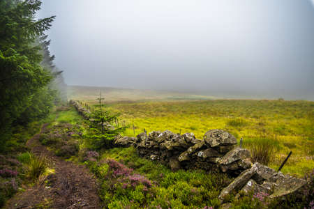 Narrow Hiking Trail Through Misty Conifer Forest and Heather Flowers in Scotland Banco de Imagens