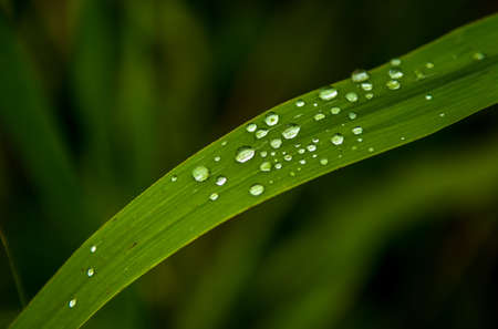 Green Grass Blade with Water Drops on Surface Reklamní fotografie