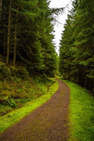 Narrow Gravel Path Through Conifer Forest in Scotland Reklamní fotografie
