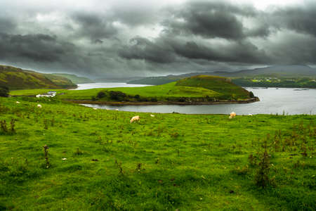 Green Pasture With Sheep At Atlantic Coast On The Isle Of Skye In Scotland Reklamní fotografie