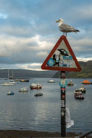 Seagull On Signpost In The Harbor Of Portree On The Isle Of Skye In Scotland