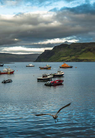 Flying Seagull Approaches At The Harbor Of Portree On The Isle Of Skye In Scotland Reklamní fotografie