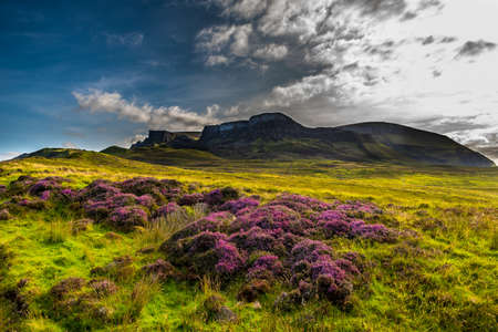 Pasture With Blooming Heather In Scenic Mountain Landscape At The Old Man Of Storr Formation On The Isle Of Skye In Scotland