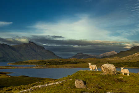 Sheep On Rocky Hill Top In Scenic Rural Landscape In Scotland