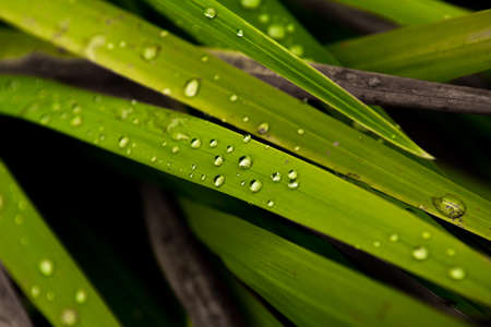 Raindrops Of Pure Water On The Surface Of Green Grass Blades Reklamní fotografie