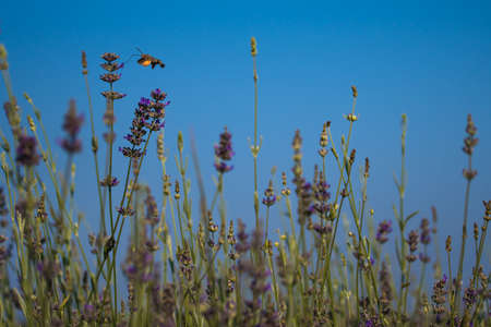 Vivid Flower Meadow With Feeding Hummingbird Hawk Moth