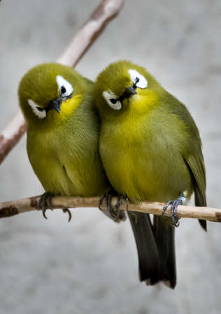 Two Small Green Bird Sitting Together On Branch Stock fotó