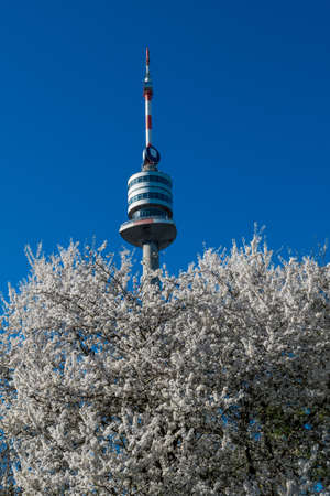 Danube Tower With Blooming Cherry Trees In The City Of Vienna In Austria