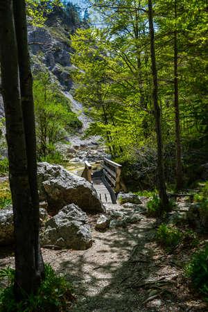 Bridge Over Clear And Wild Mountain River In Green Canyon In Ötschergräben In Austria
