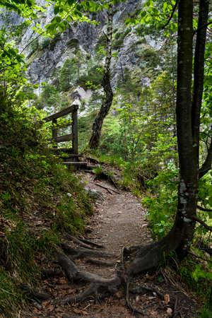Wild Forest Hiking Trail In Ötschergräben In Austria
