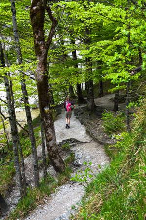 Young Woman Walks On Forest Hiking Trail In Ötschergräben In Austria