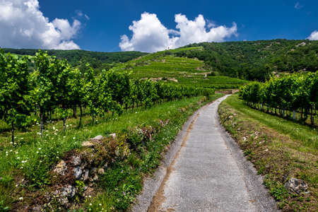 Narrow Road With Vineyards And Terraces In Wachau Danube Valley In Austria