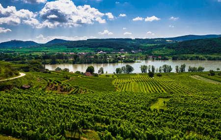 Rural Landscape With Vineyards At The River Danube in Wachau Valley In Austria Reklamní fotografie