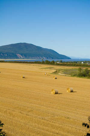 A field on Orlean Island during harvest time autumn. Stock Photo