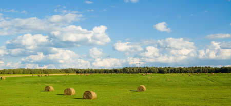 Panoramic landscape of a green field with bales