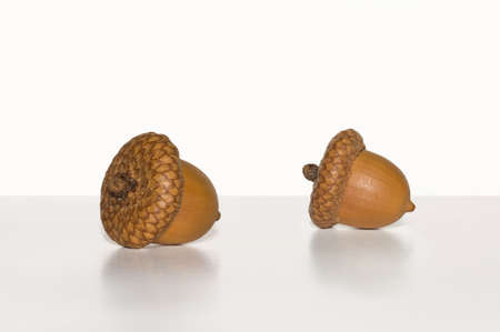 two object: Organic,Two Object, Macro shot of two acorns on a white background