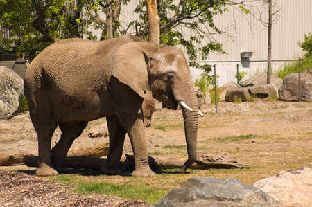 An elephant shot at granby zoo in Canada