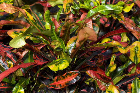 colorful plant leaves growing in a greenhouse Stock Photo