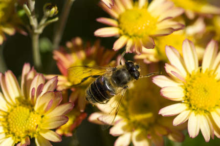 a macro photography shot of a bee on late fall flowers