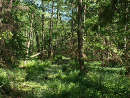 Magical forest near