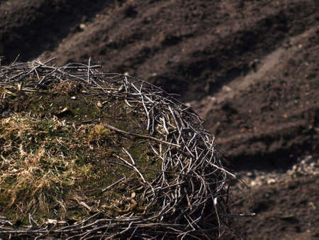 Nest stock on early spring Stock Photo