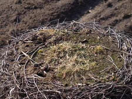Nest of stork photo