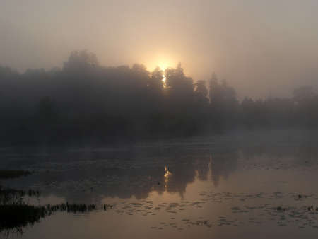 Sunrise at misty day in Bialowieza 2 Stock Photo