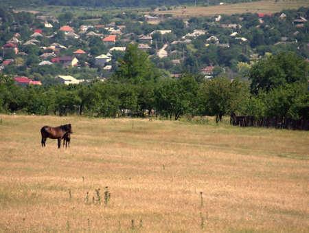 Two horses near Babadag village Romania Stock Photo