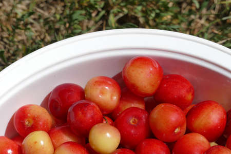 gean: Wild cherries collected from the tree