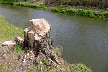 Big trunk on the bank of a small river