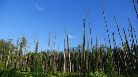 the aftermath: Destroyed forest. Fragment of destroyed forest in Poland - cause can be storms, rain, soil erosion, pest attack. This is associated with large losses in forest management and ecosystems.