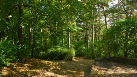 Biruta Park in Palanga. One of the oldest and most popular botanical gardens in Europe and Lithuania has nautral coastal vegetation.