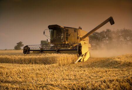 threshing: Yellow combine harvester working in field in evening light