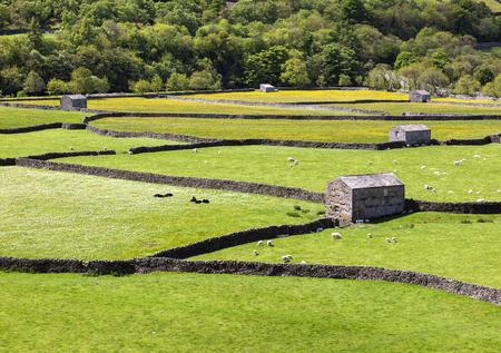drystone: Stone barns in hay meadows, Gunnerside, Swaledale, horizontal